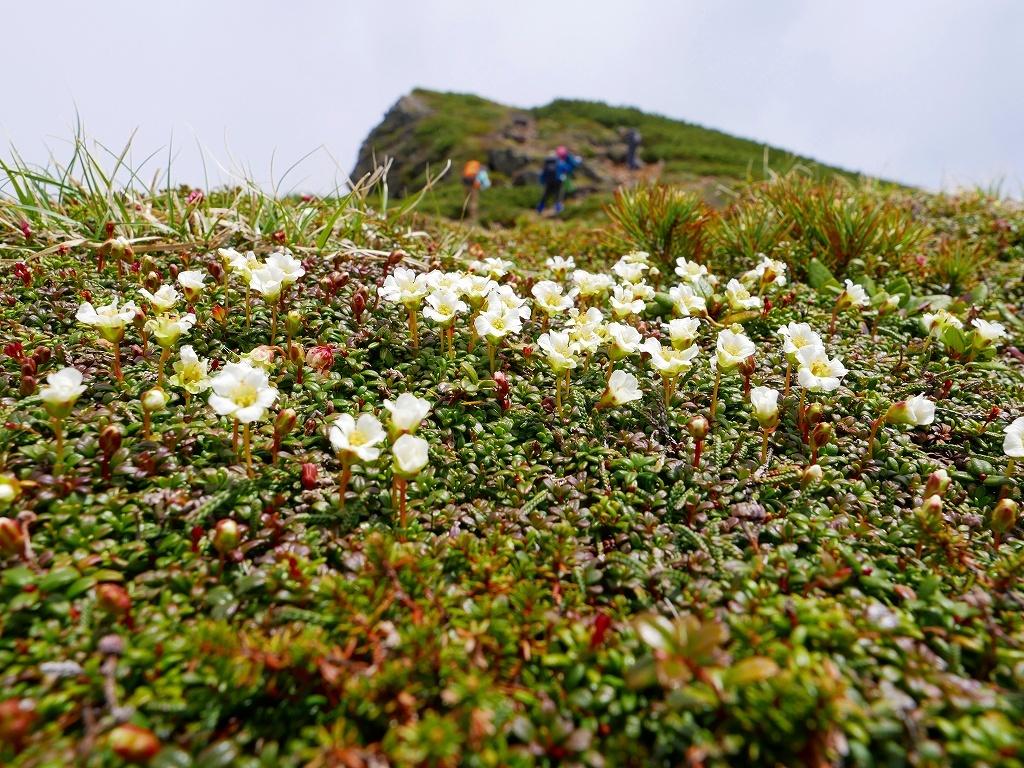 富良野岳、三峰山と上富良野岳、2019.6.24ー速報版ー_f0138096_23011141.jpg