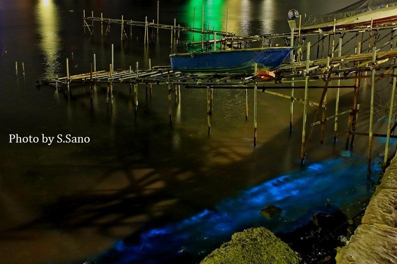 アオウミガメと夜光虫_b0348205_14234910.jpg