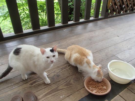 野良猫保護顛末記その(5)_f0064906_15233266.jpg