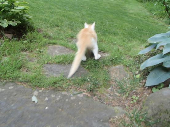 野良猫保護顛末記その(5)_f0064906_15233687.jpg