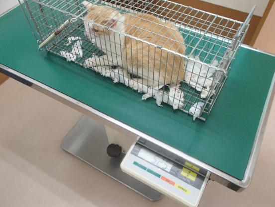 野良猫保護顛末記その(5)_f0064906_15233965.jpg