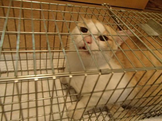 野良猫保護顛末記その(5)_f0064906_15234604.jpg