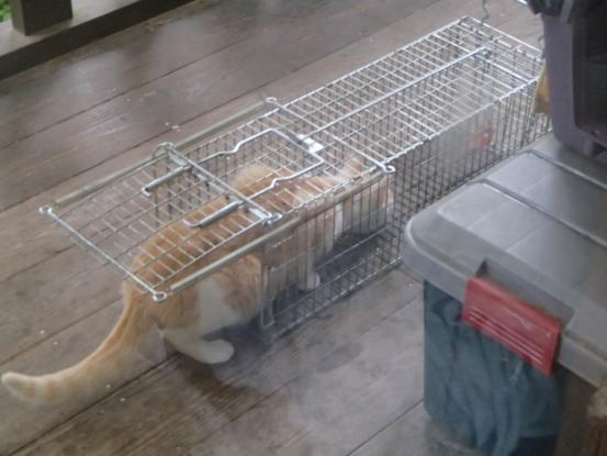 野良猫保護顛末記その(5)_f0064906_15234931.jpg