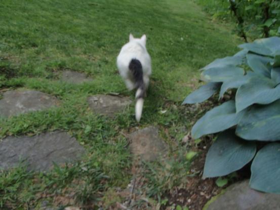 野良猫保護顛末記その(5)_f0064906_15235103.jpg