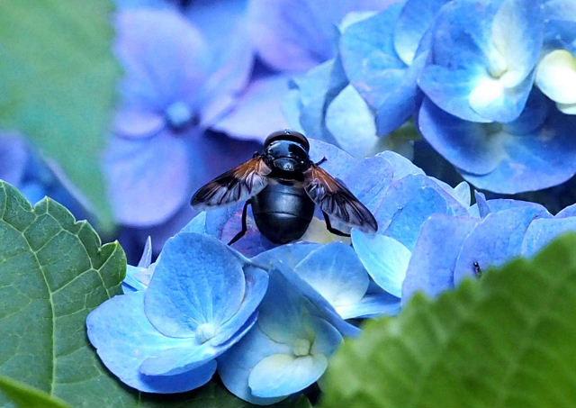 小さく細長いハムシの仲間と思いますが‥_b0025008_14415334.jpg