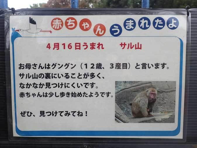 ニホンザルの子供たち(智光山公園こども動物園 October 2018)_b0355317_22144795.jpg
