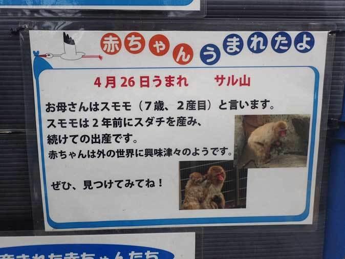 ニホンザルの子供たち(智光山公園こども動物園 October 2018)_b0355317_22153532.jpg