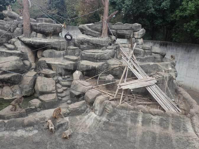 ニホンザルの子供たち(智光山公園こども動物園 October 2018)_b0355317_22165657.jpg