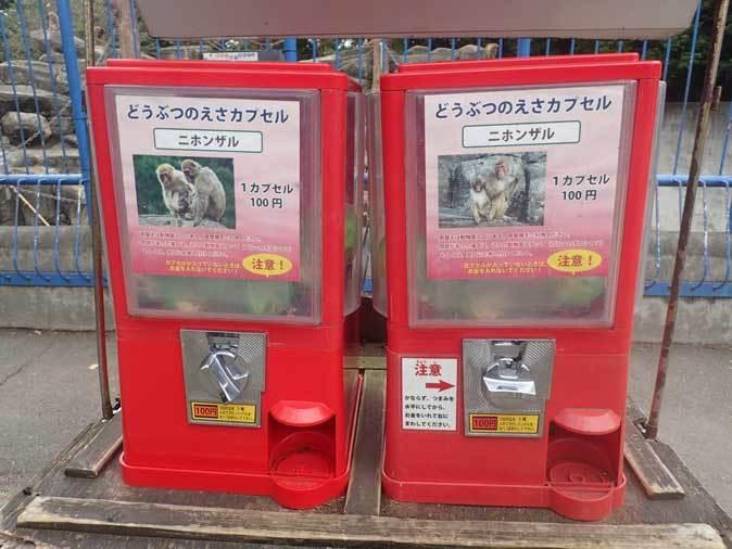 ニホンザルの子供たち(智光山公園こども動物園 October 2018)_b0355317_22194806.jpg