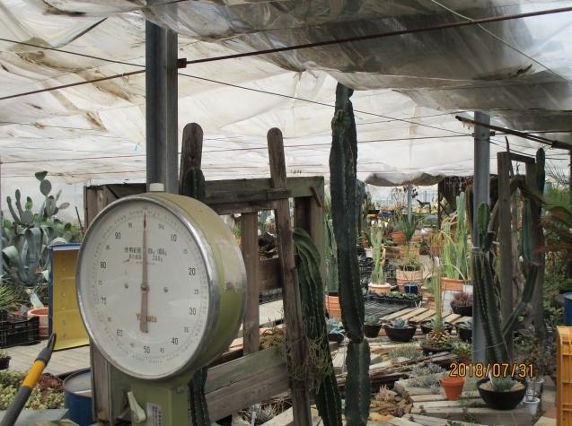 グリーン工事でも評判なガーデンフローでサボテンに挑戦!_e0361918_17152421.jpg