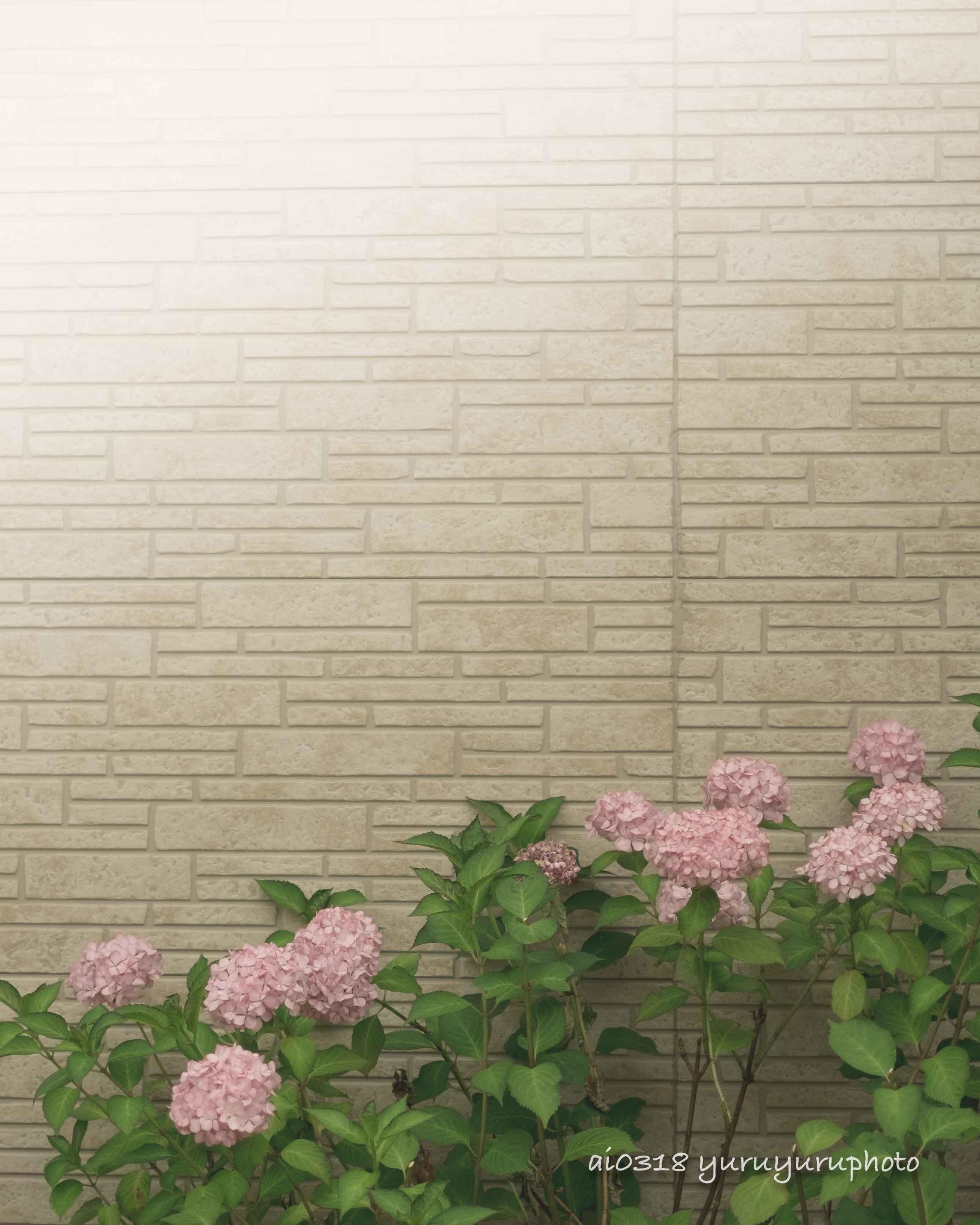 余白の紫陽花。_b0304227_06171587.jpg