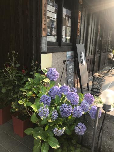 夷川通りの花たち_e0103327_15555110.jpg