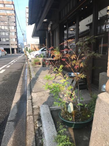 夷川通りの花たち_e0103327_15555606.jpg