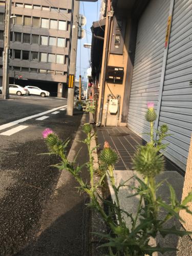 夷川通りの花たち_e0103327_15562359.jpg