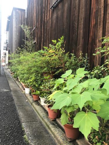 夷川通りの花たち_e0103327_15563097.jpg