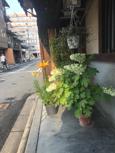 夷川通りの花たち_e0103327_15563104.jpg