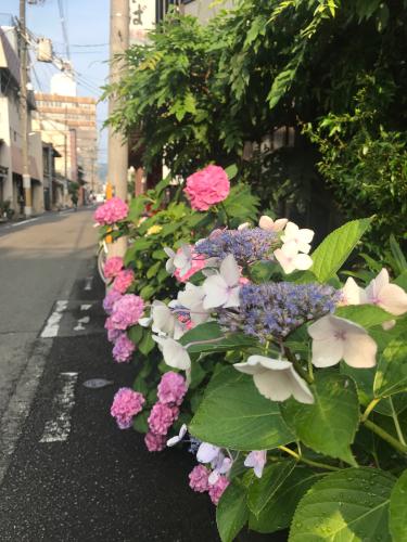 夷川通りの花たち_e0103327_15563332.jpg