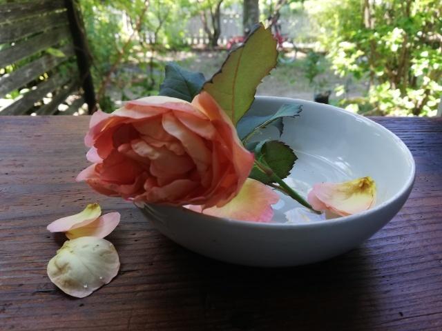 薔薇と白いお皿_b0207631_10274924.jpg