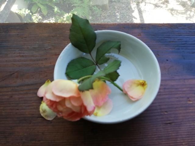 薔薇と白いお皿_b0207631_10282796.jpg