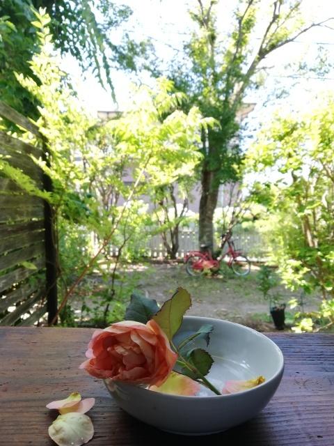 薔薇と白いお皿_b0207631_10285054.jpg