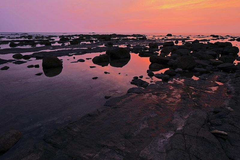 畔の岩這(あぜのいわばえ)_f0315034_13555297.jpg