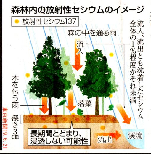 放射性セシウム長く地表に 森林内に深く浸透せず 原子力機構など研究 / 東京新聞 _b0242956_06202034.jpg