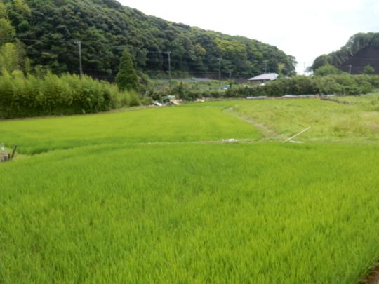 '19,6,25(火)梅雨の晴れ間に田舎道散歩!_f0060461_12152096.jpg