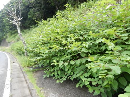 '19,6,25(火)梅雨の晴れ間に田舎道散歩!_f0060461_12201301.jpg