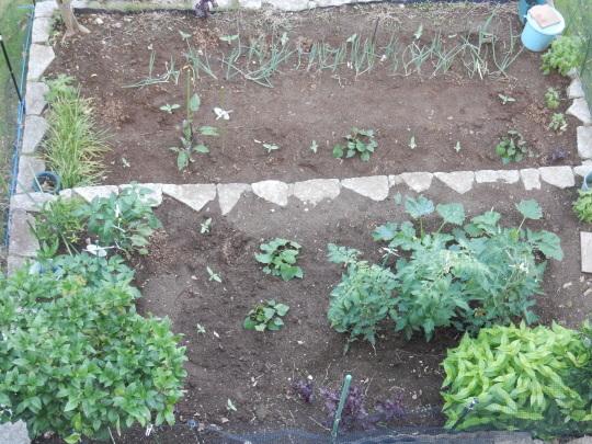 '19,6,26(水)小さな畑だけど収穫できたYO!_f0060461_18273569.jpg