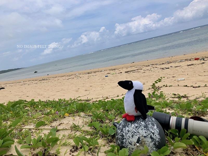 南の島へ行ってきました*2019②*1日目♪_d0367763_23561389.jpg