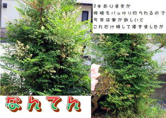 f0003174_13551161.jpg