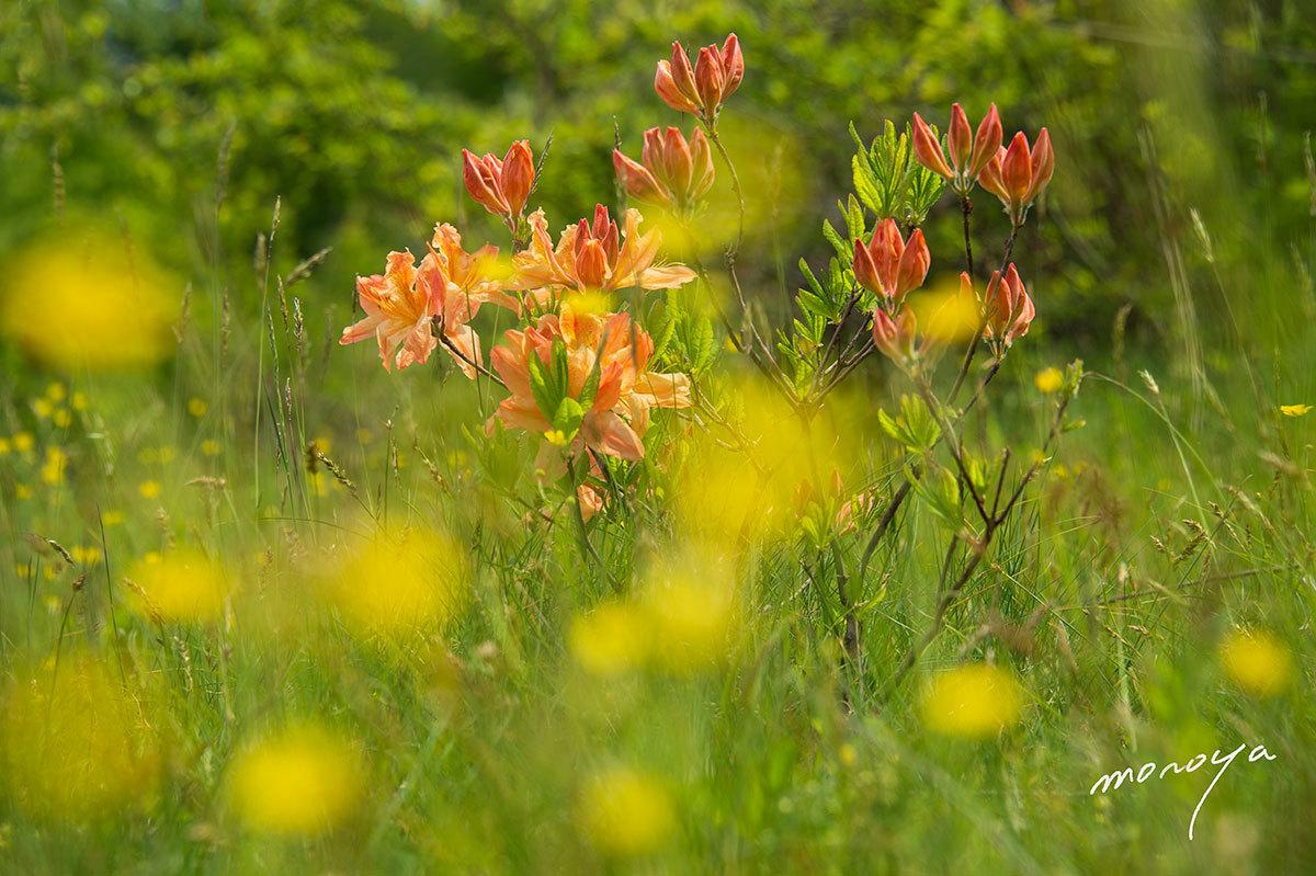 高原は花盛り_c0085877_06082634.jpg