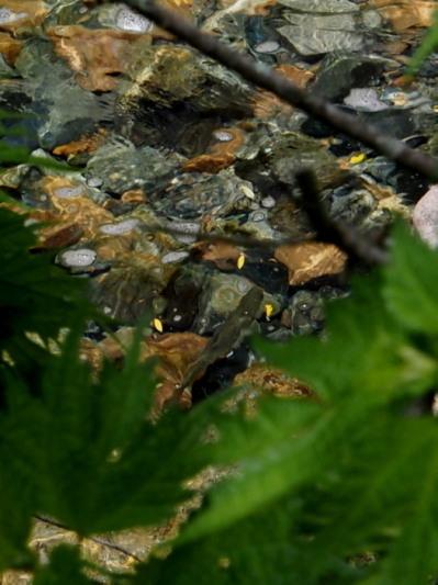 未知の溪を探釣する。_c0197578_23552747.jpg