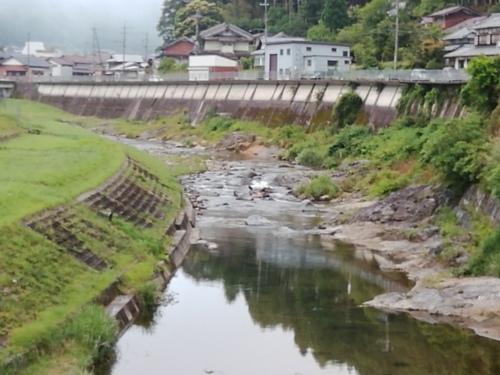 2019/6/25  水位観測  (槻の木橋より)_b0111189_05503860.jpg