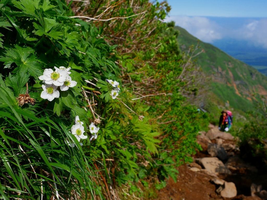 富良野岳、三峰山と上富良野岳、2019.6.24ー富良野岳編ー_f0138096_23484552.jpg