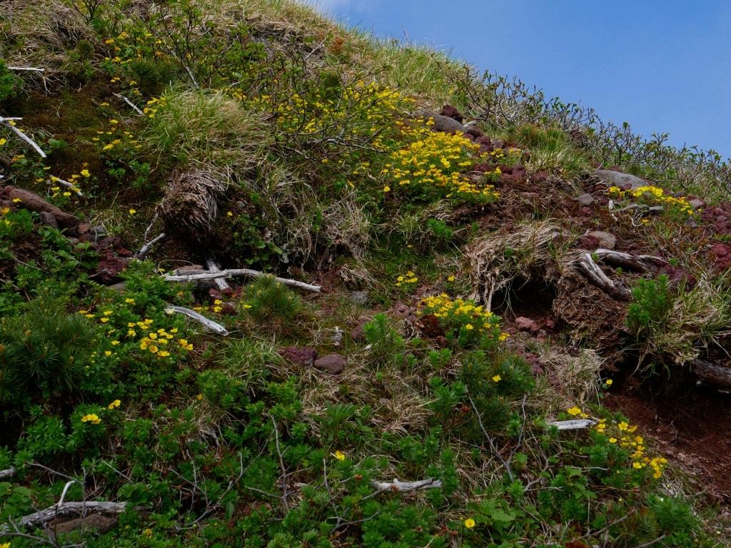 富良野岳、三峰山と上富良野岳、2019.6.24ー富良野岳編ー_f0138096_23485856.jpg