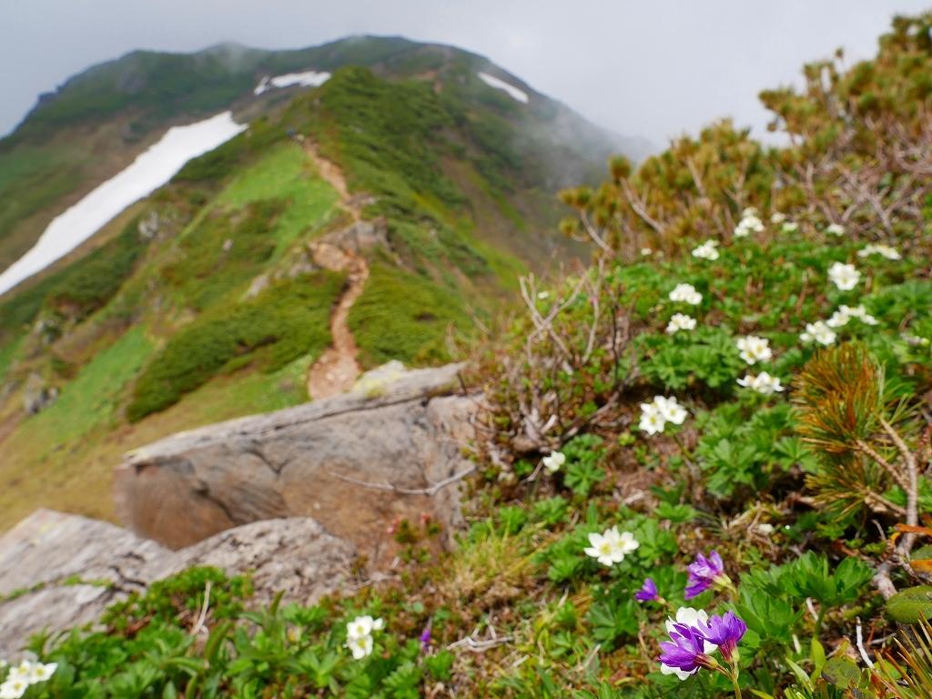 富良野岳、三峰山と上富良野岳、2019.6.24ー富良野岳編ー_f0138096_23492515.jpg