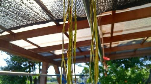 宝満川から布を織る_e0221697_22402535.jpg