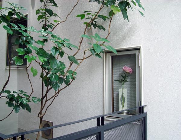 6月の窓_c0134902_11501719.jpg