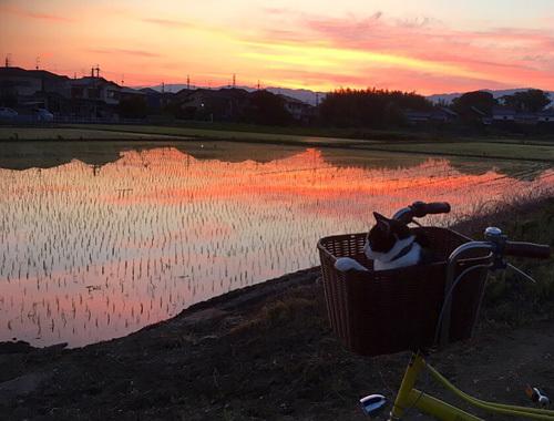 明け方サイクリングと朝焼け田んぼ。_d0077603_17524874.jpg