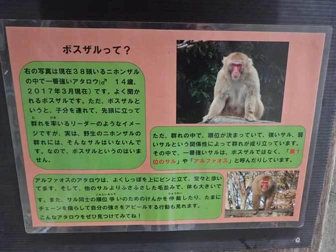 ロックンロールなニホンザル(智光山公園こども動物園 October 2018)_b0355317_21491980.jpg