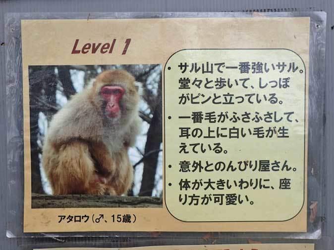 ロックンロールなニホンザル(智光山公園こども動物園 October 2018)_b0355317_21501456.jpg