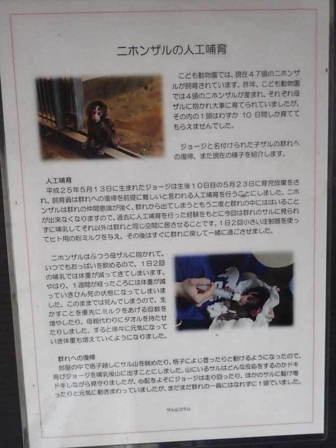 ロックンロールなニホンザル(智光山公園こども動物園 October 2018)_b0355317_21505034.jpg