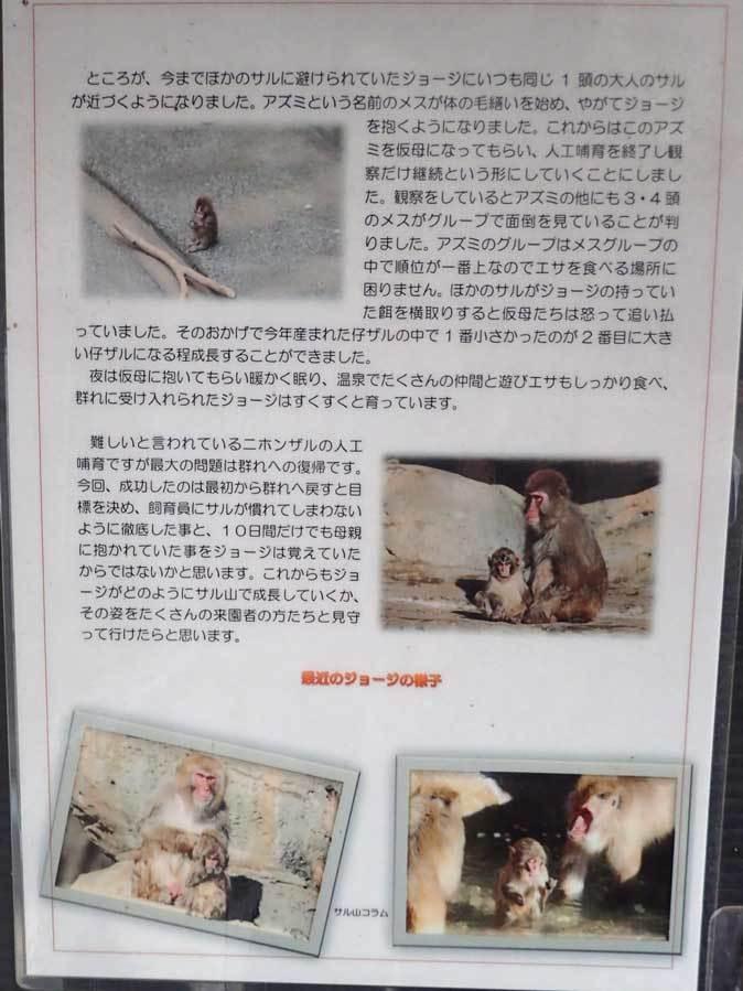 ロックンロールなニホンザル(智光山公園こども動物園 October 2018)_b0355317_21514380.jpg