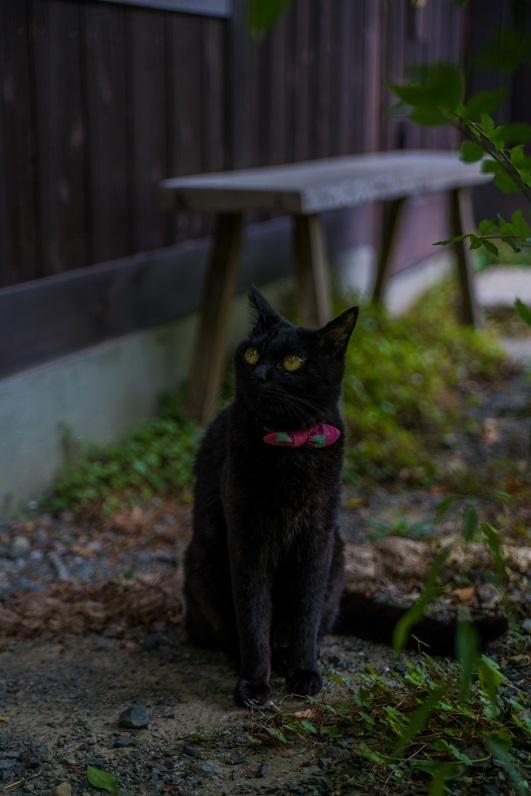 くらしのギャラリーちぐさ(福知山市)~看板猫のいるギャラリー_e0363038_10381961.jpg
