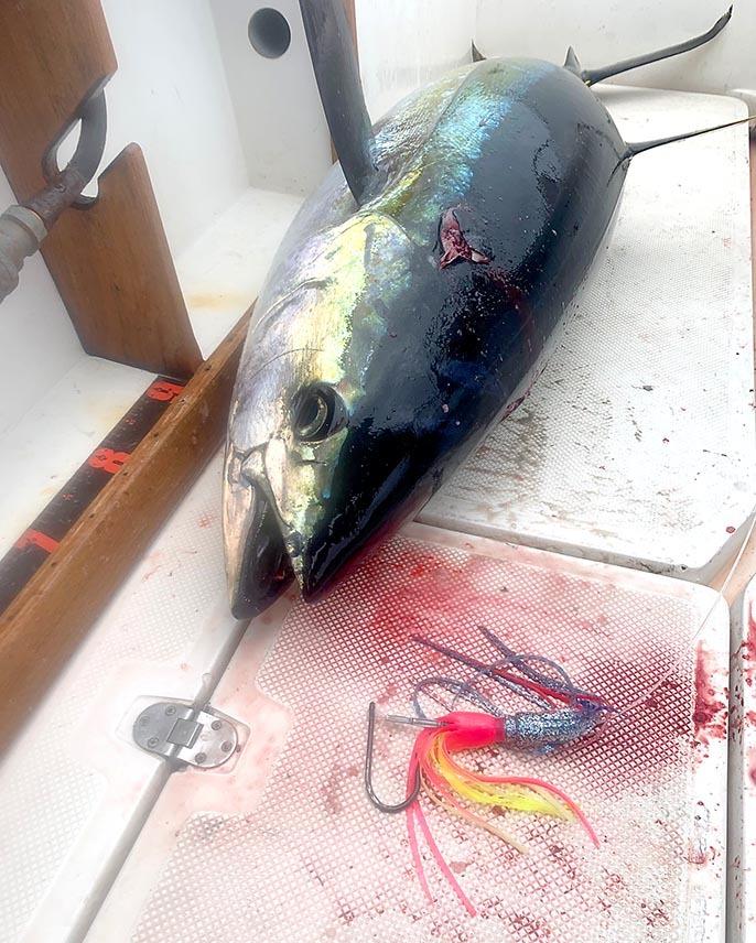 カイルアコナ沖でカジキとキハダキャッチ_f0009039_10015548.jpg