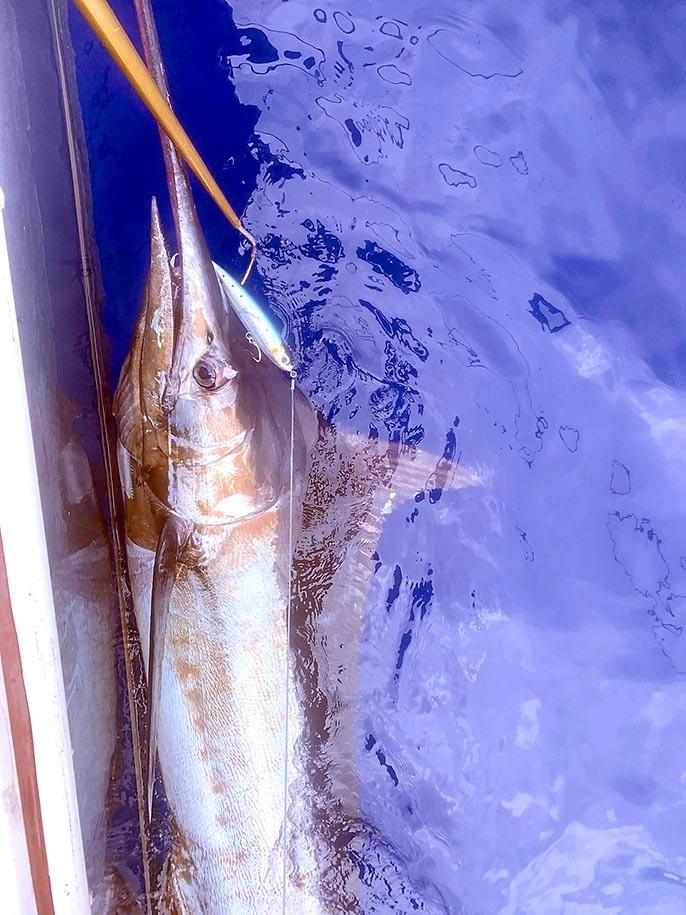 カイルアコナ沖でカジキとキハダキャッチ_f0009039_10021269.jpg