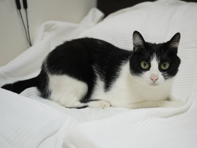 猫のお留守番  ココちゃん編。_a0143140_23014842.jpg