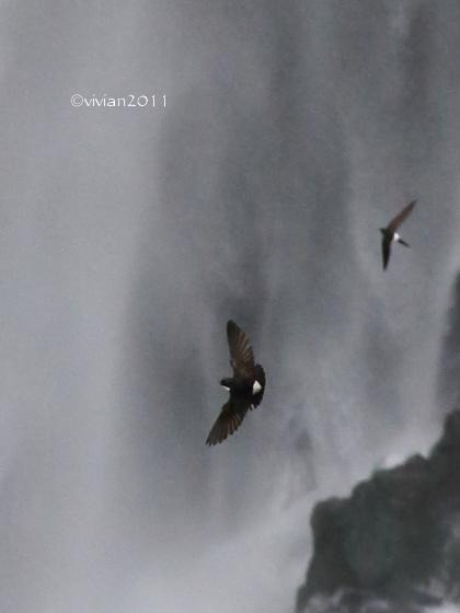 日光 大人の遠足 おまけ ~奥日光で出会った野鳥たち~_e0227942_22194948.jpg