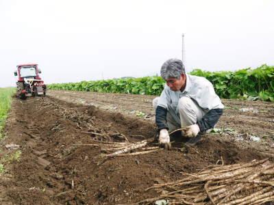 最旬食材!無農薬・無化学肥料栽培で育てた熊本県菊池市産の「有機栽培の水田ごぼう」早い者勝ちです!_a0254656_16194147.jpg